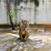 天王寺動物園周辺の安い駐車場!平日500円、土日は1000円!
