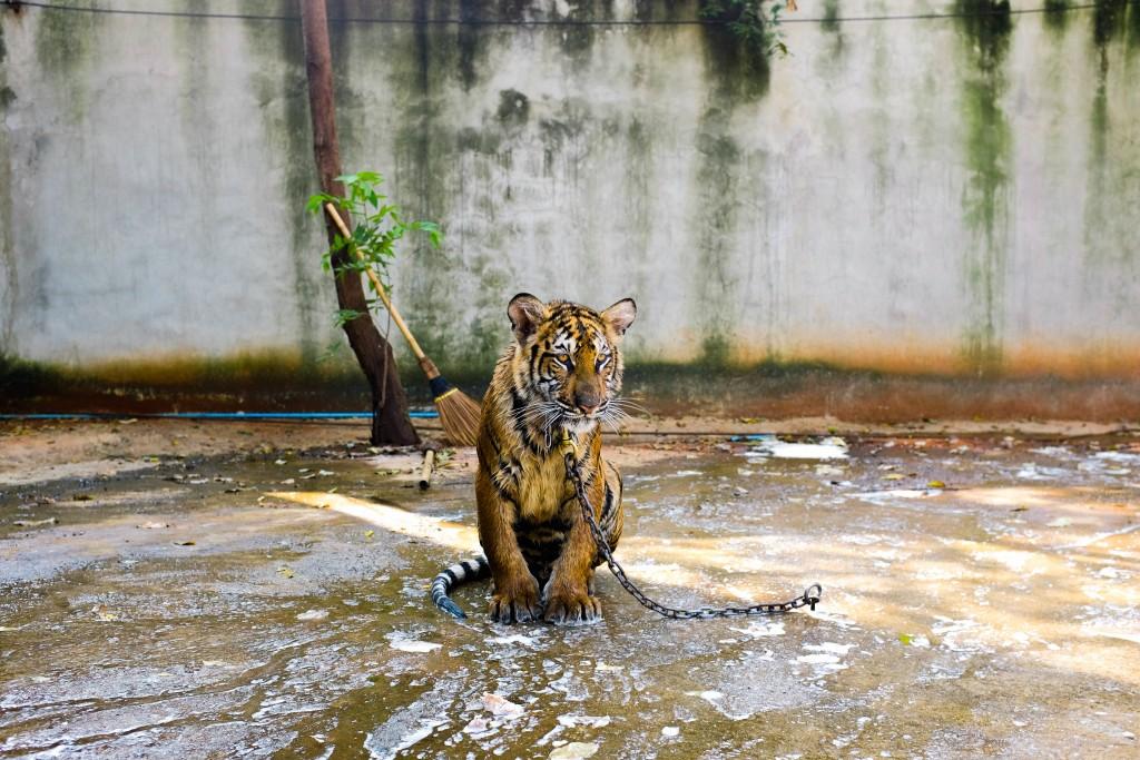 動物園の割引